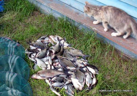 карраччи ловля рыбы